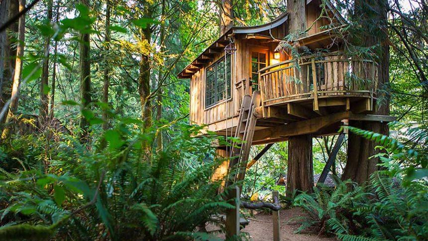 camptrekking-sea-thumb-summer-treehouse